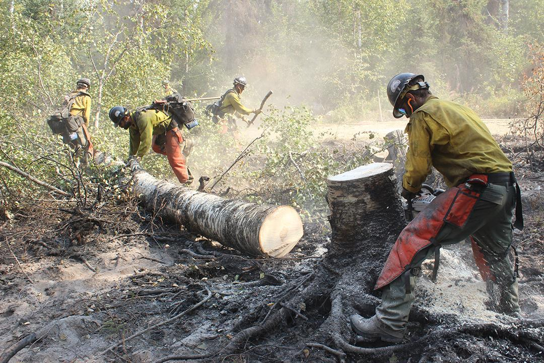 Umpqua Firefighters Buck Tree 2. Photo: Mike McMillan - DNR