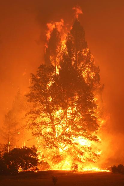 Trees ablaze. Photo Credit: Mike McMillan/USFS
