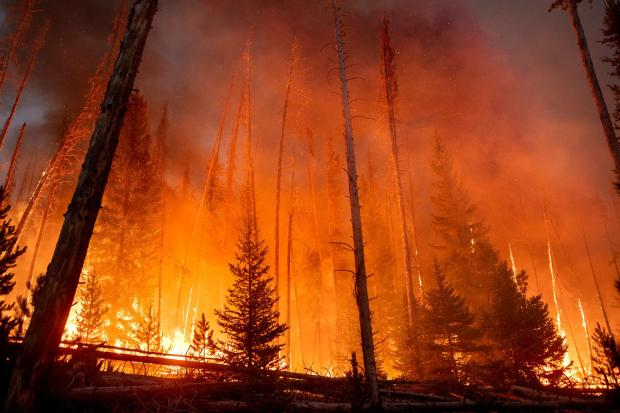 Fire consumes aspen and lodgepole as the burning operation progresses on the Williams Fork Fire Aug. 24. Photo by Kari Greer