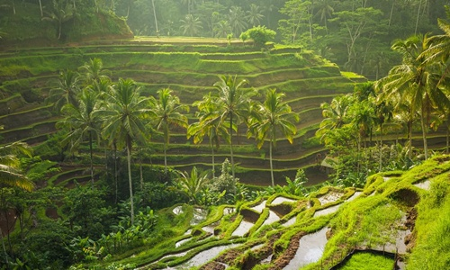 Bali Tour 5 Days 4 Nights