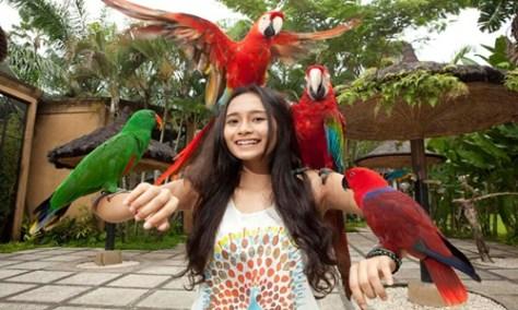 Bali Bird Park and Uluwatu Tour