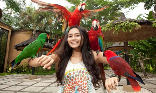 Bali Bird Park and Uluwatu Tour