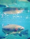 fish_beaches