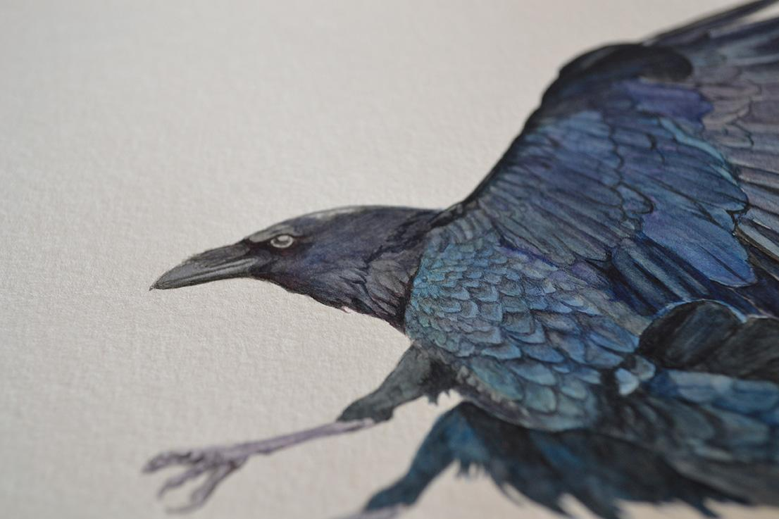 Crow for Hank by Cheung Vong