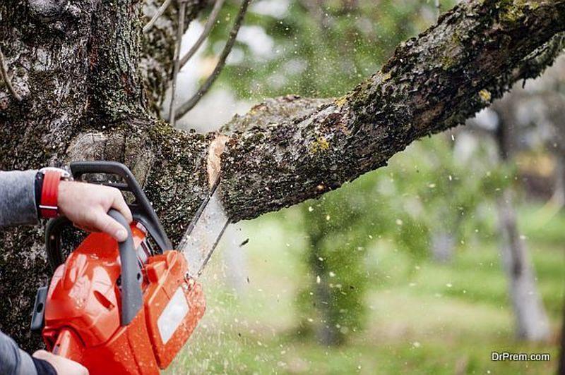 tree needs removed