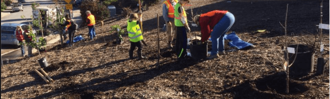 A New Fruit Orchard in Redwood City by Roosevelt School