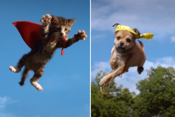 Flying Kittens vs Flying Puppies Incredible Things