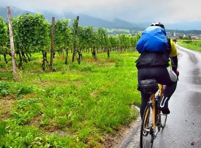 Balade vélo dans les vignes