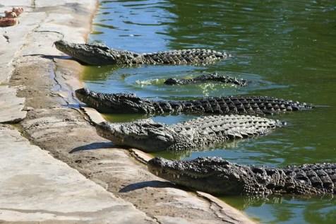 ferme aux crocodiles Montélimar