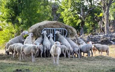 les agriculteurs à Montélimar et en Drôme provençale