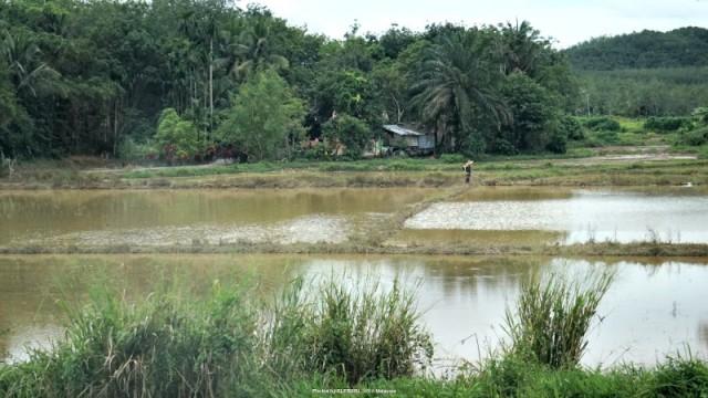 rizsfold.malajzia