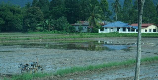 rizsfoldek-malajzia