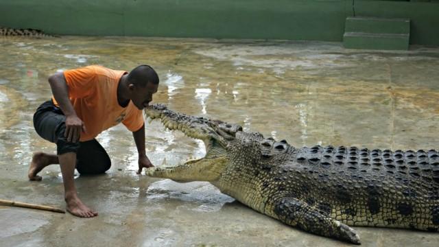 krokodil-puszi-langkawi-malajzia