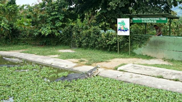 krokodiletetes-langkawi-malajzia