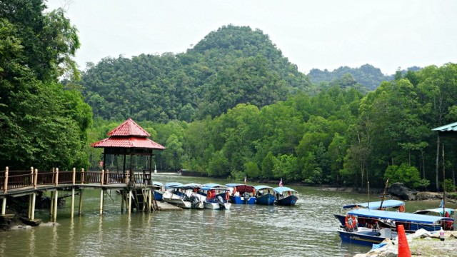 mangrove - malajzia - langkawi - hajo