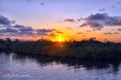 Mangrove - Jardines de la Reina