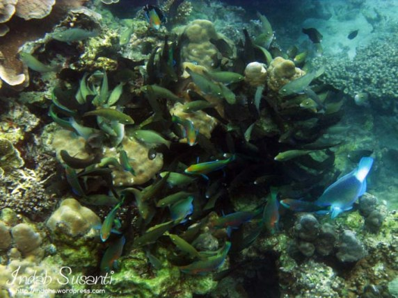 Snorkeling Picture: Up to Bottom