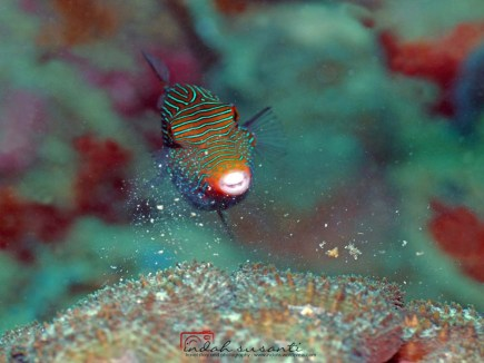 Corals as food resource for fish