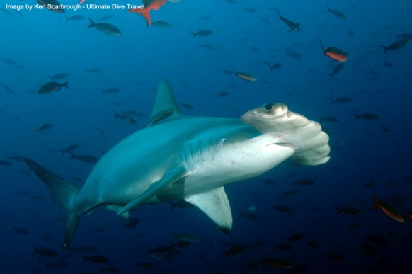 Galapagos - Ultimate Dive Travel