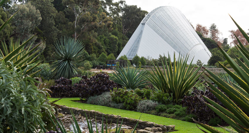tuesday october 17 2017 the bicentennial conservatory in the adelaide botanic garden