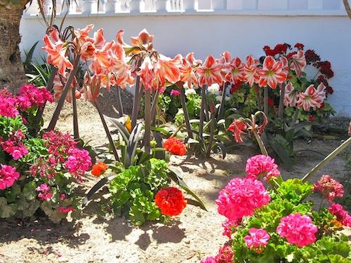 Lillies Spain
