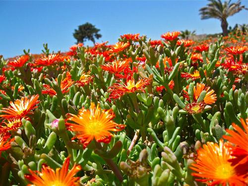 Mediterranean flowers 2230