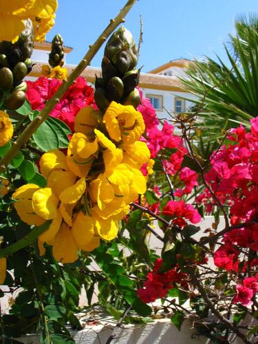 Inspirational flores