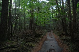 Aokigahara Forest Image by Simon Desmarais licensed under Creative Commons CC BY-SA 2.0>