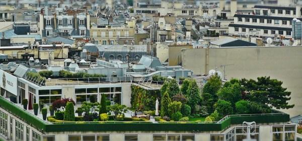 rooftop-garden-paris-trees-gree-roof