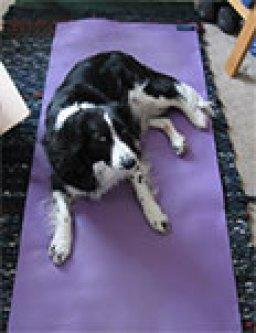Border collie on a yoga mat