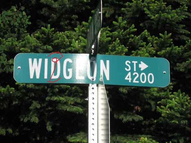 Webwigeon_1025