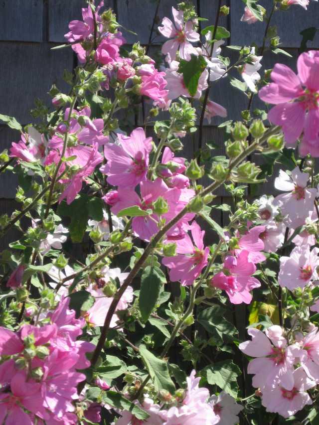 Weboysterflowers_1354