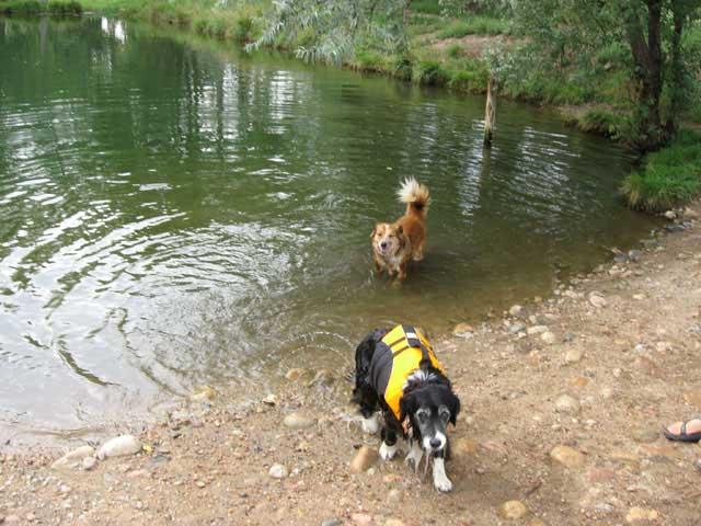 Webdogs_1564