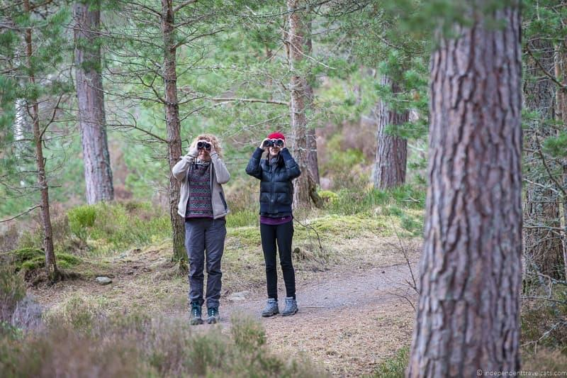 birdwatching things to do in the Cairngorms National Park in winter