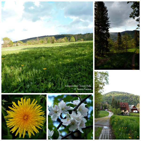 Zawoja meadows and flowers