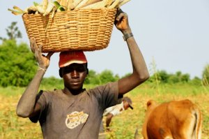 Photo taken during interviews with farmers in Mali by Peter Caiser