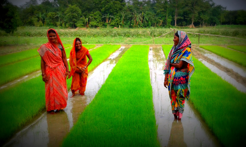 Community nursery offers means for economic empowerment of women farmers