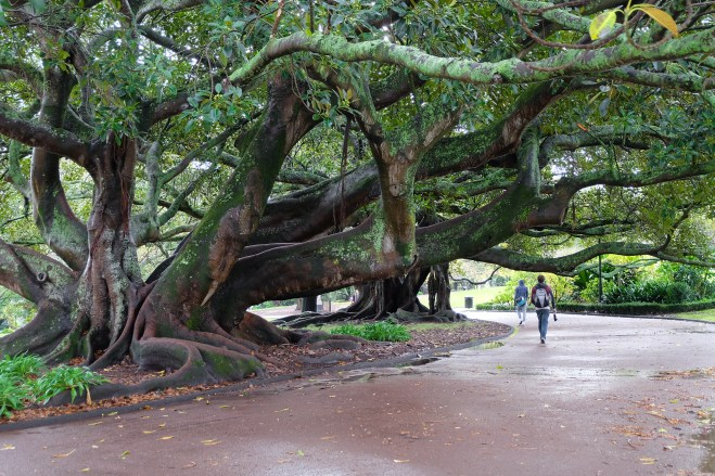 Walking in Albert Park in the City Centre, Auckland.