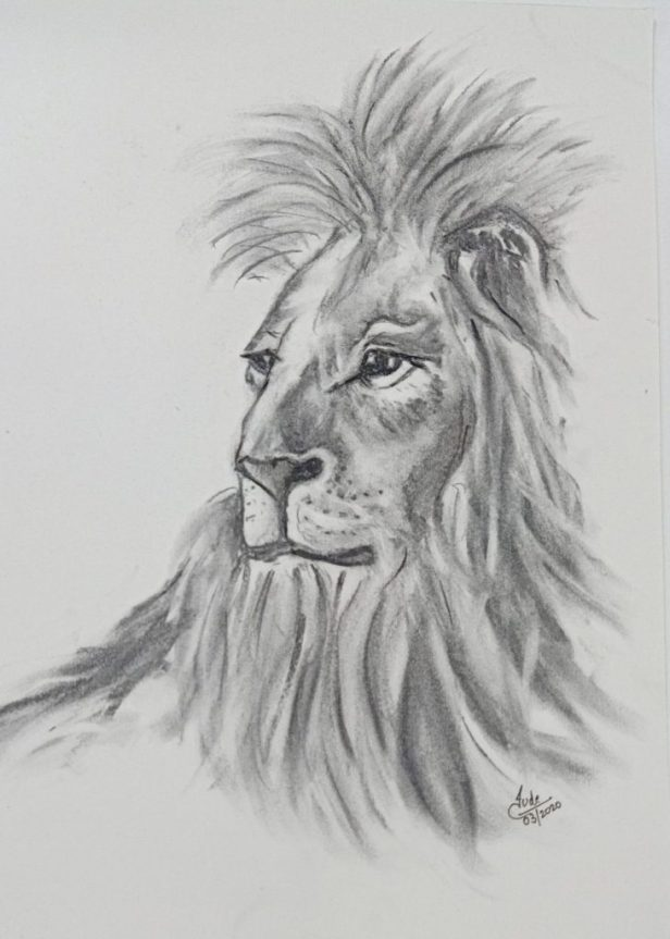 Lion sketch in charcoal by Jude D'lima
