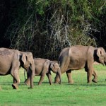 Encounters With Elephants
