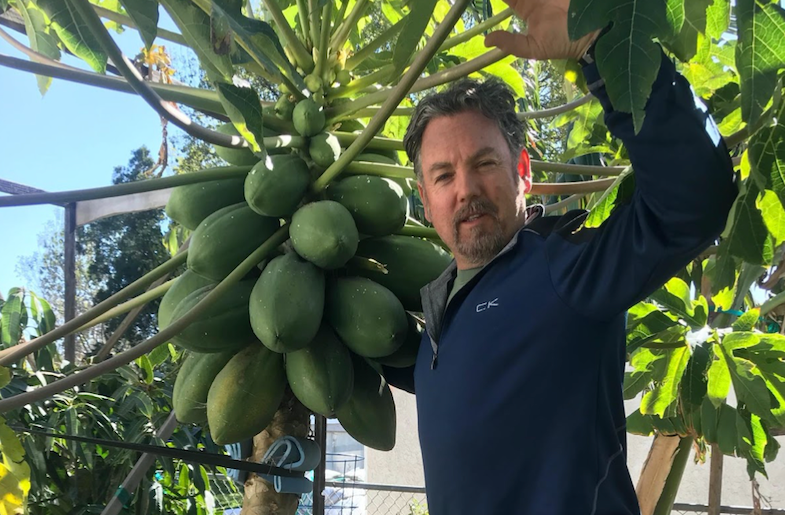 Growing Tropical Fruits in California?