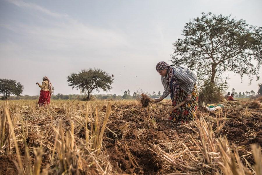 Women Working on UMA Oils Farm in Chattisgardh