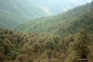 Trekking in Himalayas, Rishikesh