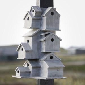 bird_commune[1]