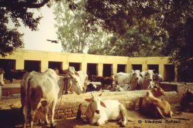 At a Gurukul (religious school) in Haryana (India)