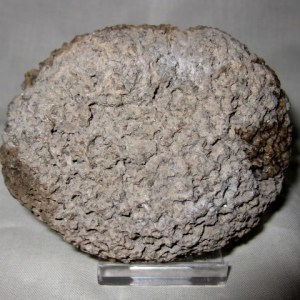 Fossil Cretaceous Age Freshwater Stromatolite Forming An Oncolite Around A Rhyolite Clast from Mexico