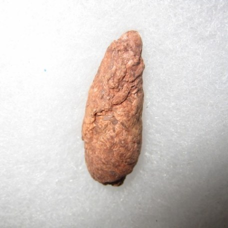 Fossil Triassic Age Unidentified Dinosaur Coprolite from New Mexico
