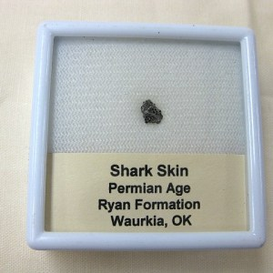 Fossil Permian Age Shark Skin Ossicle from Oklahoma