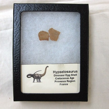 Fossil Cretaceous Age Hypselosaurus Dinosaur Egg Shell from France