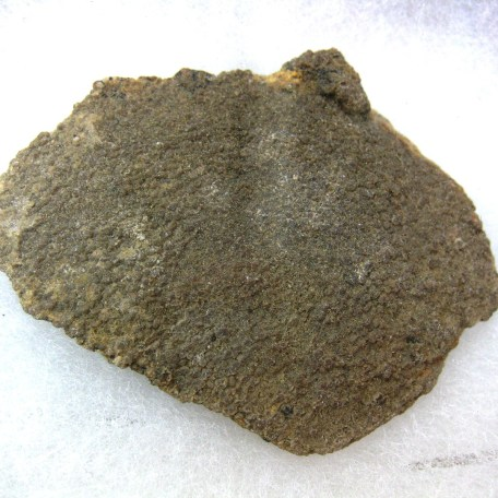 south america saltasaurus dinosaur egg shell 14a